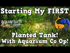 26 Best Aquarium Co-Op youtube Videos images in 2017