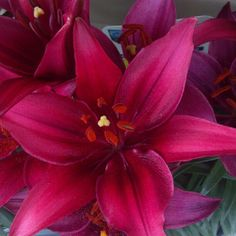 Red Lilly - bridesmaid