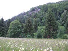Meadow under Pulčín´s rocks (east Moravia)