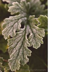 Copyright © Tracy Bradbury - 1st frost.