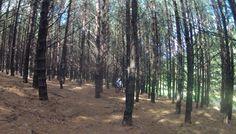 Mhlambanyatsi forest... #epicswazitrails keep those wheels exploring...