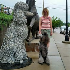"""Receive great pointers on """"toy poodle"""". They are offered for you on our internet site. Dog Training Methods, Basic Dog Training, Dog Training Techniques, Training Your Puppy, Training Dogs, West Highland Terrier, Yorkshire, Poodle Cuts, Puppy Obedience Training"""