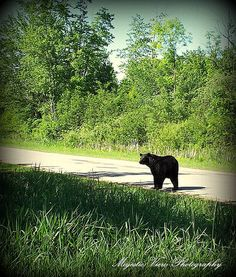 northern michigan animals images - Google Search