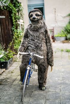 Sloth Costume by Karoline Hinz. Sloth riding a bike? - Sloth Costume by Karoline Hinz. Sloth riding a bike? Cute Baby Sloths, Cute Sloth, Cute Baby Animals, Funny Animals, A Sloth, Smiling Sloth, Funny Sloth, Baby Otters, Three Toed Sloth
