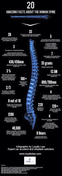 Amazing facts about the spine.