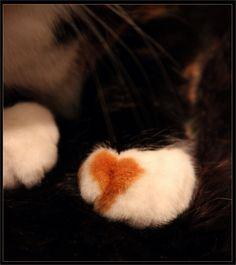 #cat #heart #love