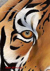 """Eye of the Tiger"" by Ron Atwood"