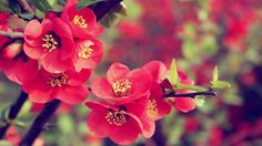 Flower Wallpapers High Quality