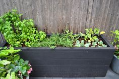 Urban gardening in a wide planter box.