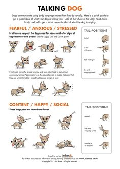 Learn about how your dog Communicates with you with this Talking Dog Chart