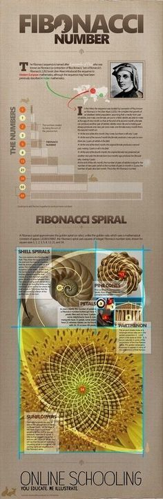 , Research Mathematician at the National Institute of Standards and Technology (NIST) Mathematical Modeling Group, gives a brief lesson on the Fibonacci Numbers - Bilder für Sie - Picgram Website Fibonacci Number, Fibonacci Spiral, Divine Proportion, Math Art, Golden Ratio, Golden Rule, Teaching Math, Maths, Science And Nature