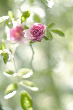 ❂ Every time I see a beautiful rose I think of you and I miss you! <3