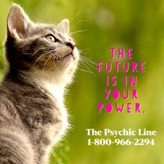 The Psychic Line offers the best telephone psychic medium readings. Call our psychic hotline for an accurate reading by one of our intuitive readers. Psychic Hotline, Medium Readings, Psychic Mediums, Call Backs, Psychic Readings, Love And Light, Intuition, Namaste, Cat