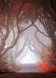 Autumn Tunnel, Ireland. by Declan Keane
