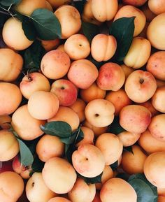 Orange apricot fruits with red cheeks