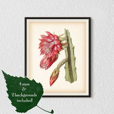 Instant download printable art Botanical by RestoredBotanicalArt