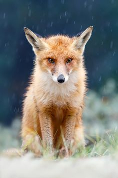 I Can't Stand the Rain (by Roeselien Raimond)