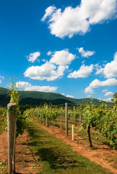 Virginia Wine Country-The Casual Travelist turns 2, another year of adventures near and far. www.casualtravelist.com