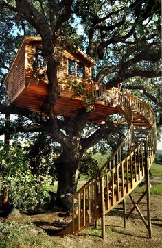 La Cabane Perchee is designed the many tree house and hotels projects around the world. This Italian Tree House has a single bed available with bathroom and tiny kitchen area. Outside of tree house. Beautiful Tree Houses, Cool Tree Houses, Building A Treehouse, Tree House Designs, Tree Tops, In The Tree, Cabana, Play Houses, Architecture