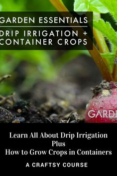 We all want to more efficiently grow healthy plants. This course teaches the ins & outs of installing your own drip irrigation system for any size garden. And how to grow crops in containers. No space is too small for harvestable crops to be grown in containers. With this course you learn how to save time, water & money! #ad #garden #gardening #dripirrigation #wateringthegarden #containergardening #smallspacegarden
