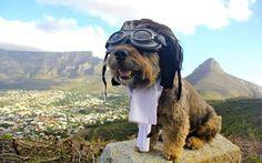 I meravigliosi viaggi di Oscar, il cane giramondo