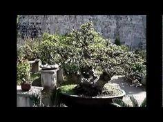 Bonsai in Nanjing, China Part 1 bonsai garden Penjing at the Zhonghua Gate in Nanjing, China. To keep the videos short, I have them in several parts. Nanjing, Bonsai Garden, Videos, Art, Art Background, Kunst, Performing Arts, Art Education Resources, Artworks