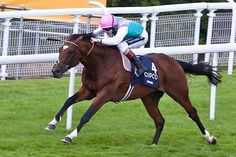 Frankel (2008, 4yo horse Galileo - Kind) is deserved of legendary status.  14 wins from 14 starts culminating in his last start Oct 2012 win taking the Group 1 Queen Elizabeth 11 stakes for the second year in a row. Sadly he is being retired to stud as a 4yo denying him of further greatness.