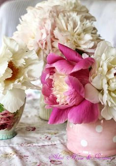 flowers.quenalbertini2: Peony Time in the Garden   Aiken House & Gardens