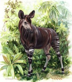 (Charismatic Megafauna) The Okapi Tropical Animals, Okapi, Curious Creatures, Fabric Animals, Most Beautiful Animals, Pebble Painting, Watercolor Painting, Mundo Animal, African Animals