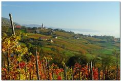 Wineyards in Bela krajina | Slovenia, Photo: Tomislav Urh