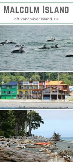 Situated off the northeast shore of Vancouver Island you will find the hidden gem of Malcolm Island. It's a place where Orca go to rub up against the smooth pebbled beach, and where humans go to create lasting memories. Vancouver Travel, Vancouver Island, Bodega Bay Camping, Camping In Pennsylvania, Canada Pictures, Orcas Island, Canadian Travel, Island Life, Vacation Spots
