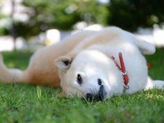 Pet Birds, Labrador Retriever, Cats, Animals, Labrador Retrievers, Gatos, Animales, Animaux, Animal