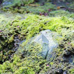 【8nhc8】さんのInstagramをピンしています。 《#過去pic #シジミチョウ #シジミ蝶 #蝶 #蝶々 #昆虫 #こけ #苔 #自然 #ファインダー越しの私の世界 #写真撮ってる人と繋がりたい #写真好きな人と繋がりたい #風景 #お写んぽ #森 #水辺 #lycaenid #butterfly #moss #nature #naturelovers #natureporn #photography #photograph #insect #wild #scenery #cute #forest #waterside》