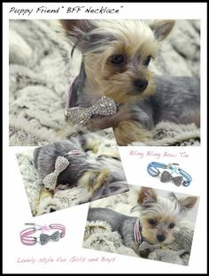 Dibalulu Pet Couture Dog Accessories – Puppy Friend Dog Necklace – Pink – S « DogSiteWorld.com