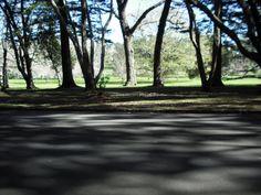 Location: Cornwall Park, Auckland