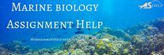 Marine biology assignment help