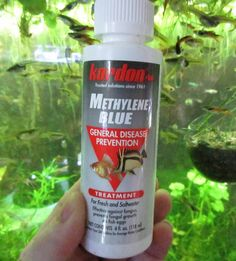 Methylene blue is the best solution to treat freshwater fish aquarium to treat fish fungus bacterial infection and parasitic growth in water. Freshwater Aquarium Fish, Aquarium Fish Tank, Methylene Blue, Goldfish, Fungi, Fresh Water, Medical, Pets, Bacterial Infection
