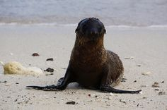 Blogger @chowmeyow captured a shot of this adorable sea lion on her trip to the Galápagos Islands with us.