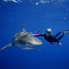 Ocean Ramsey (The Shark Whisperer) free swims with a great white - Coastal Living
