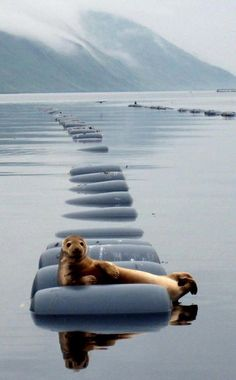 Seal Chilling Out.