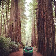 Redwood National Park, Crescent City, CA