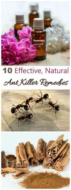 These 10 Ant Killer Remedies and Ant Repellents are natural and effective. Rid your home of ants in a less toxic way!