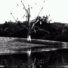 The Cemetary Tree Dunlap, Tn Photo by Sue Ann Lockhart