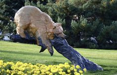 """Bear Pause""  Artist: Walt Horton  Location: Denver West Office Park"