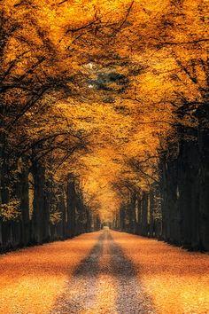 Golden Alley, Kassel, Germany