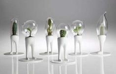 Legged Potted Plant Holders - The Domsai Terrarium by Matteo Cibic is a Standing Work of Living Art (GALLERY)