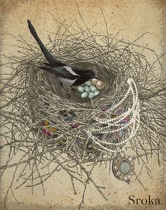 Magpie 'Evangeline' Notary's tale