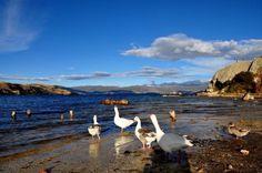 El turismo Rural nos enseña  los valores culturales, las costumbres y los oficios de la vida campesina, que aún conserva una autenticidad ancestral;  también comparte los frutos de una tierra generosa y amable. Un punto de referencia para la práctica del turismo Rural y Ecológico es El Lago de Tota. Ven y Visitamos !!  Cabaña Buenavista Tu casa en el Lago de Tota .  Aquitania,Lago de Tota los acoge.  WhatsApp 3112333478   Web:http://goo.gl/5n8KQF   El  Lago de Tota es e
