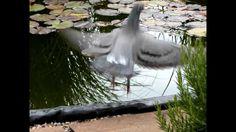Natur Pur - Entspannung Pur - mit den Sinnen genießen - ein kleines Stüc...