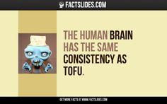 The human brain has the same consistency as tofu.